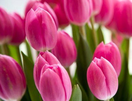 花に関する表現