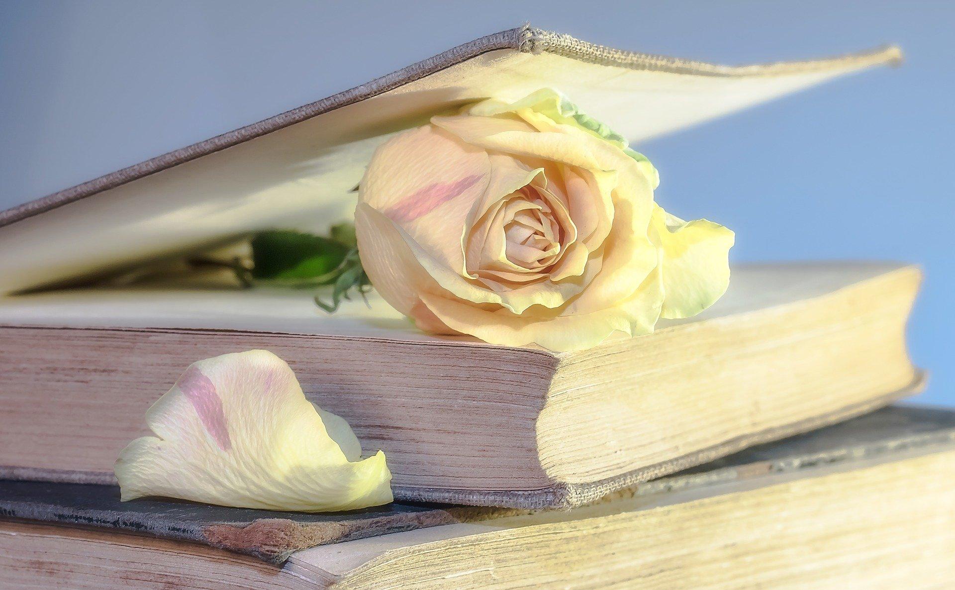 本に関する英語表現